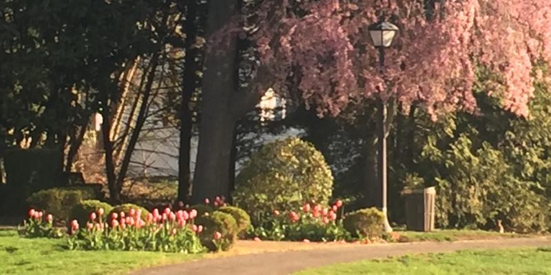 Trees in Village Green